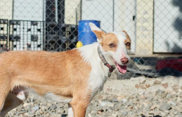 Kieliszek przeznaczone do walki radioelektronicznej bezpańskiego chudego psa stojącego na żwirowej ziemi