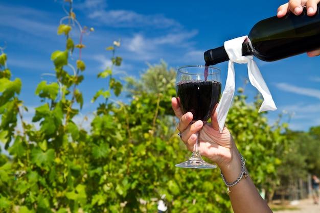 Kieliszek wina w rzędach winogron