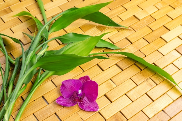 Kiełki bambusa i fioletowa orchidea na drewnianej macie