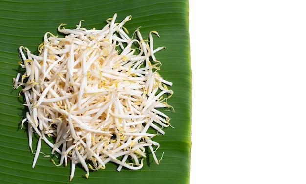 Kiełki fasoli na liściu bananowca