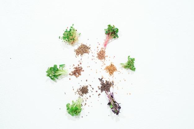 Kiełki kopru microgreen, rzodkiewki, musztarda, rukola, musztarda w asortymencie na jasnym tle