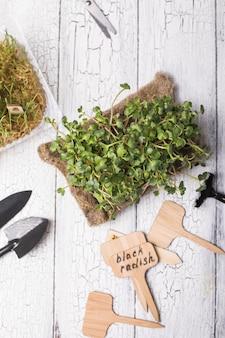 Kiełki mikro zielonej rzodkwi