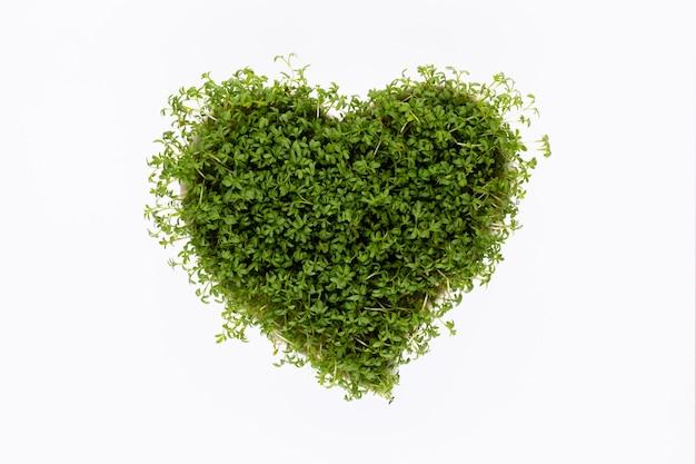 Kiełki nasion w kształcie serca