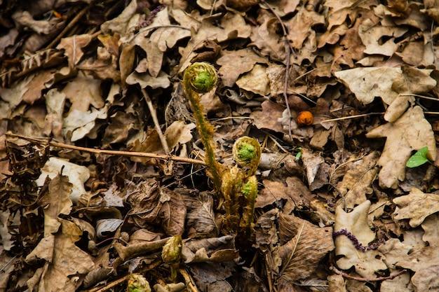 Kiełki paproci w lesie