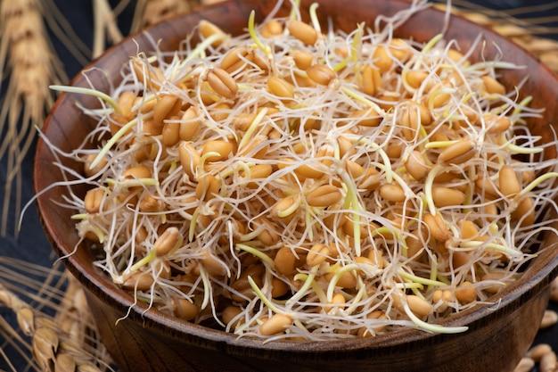 Kiełki pszenicy surowe, wegańskie, wegetariańskie zdrowe jedzenie. zbliżenie.
