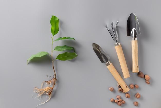 Kiełki rośliny doniczkowej i zestaw narzędzi ogrodowych