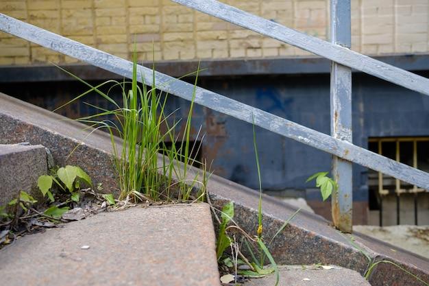 Kiełki samotnej małej rośliny na tle szorstkich granitowych stopni i metalowych balustrad