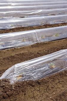 Kiełki szklarniowych szklanych linii plastikowych