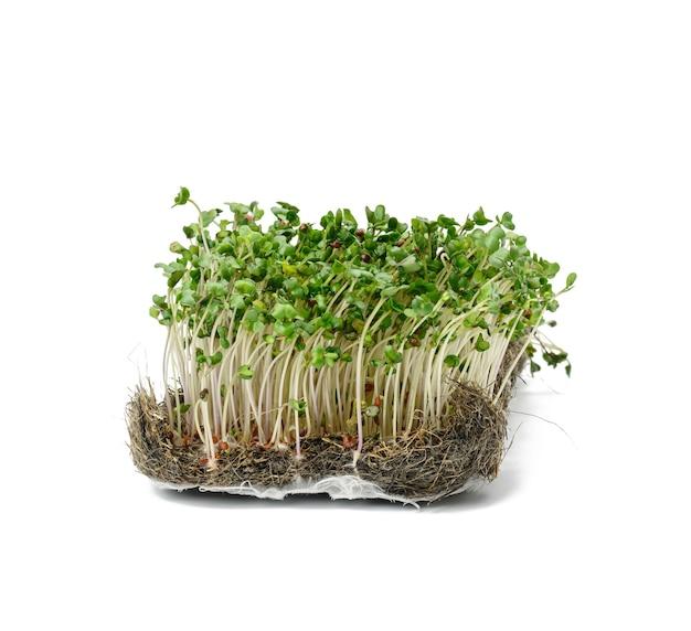 Kiełki zielonego brokuła na białej powierzchni, zdrowe mikrogreeny, z bliska