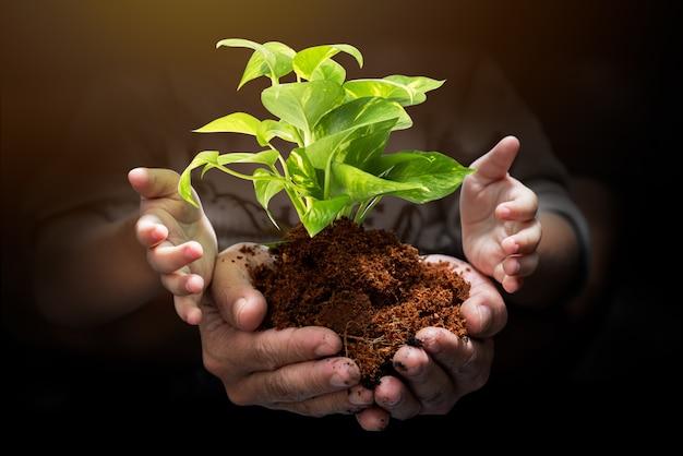Kiełkować drzewa na rękę