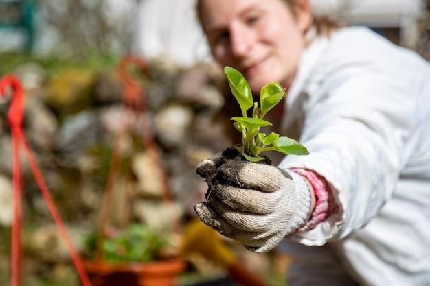 Kiełkować w ogrodnikach w rękawiczkach słoneczny dzień