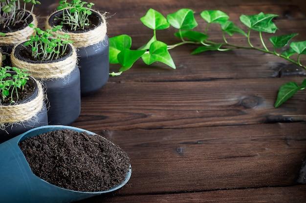 Kiełkujące nasiona w słoikach na drewnianym tle