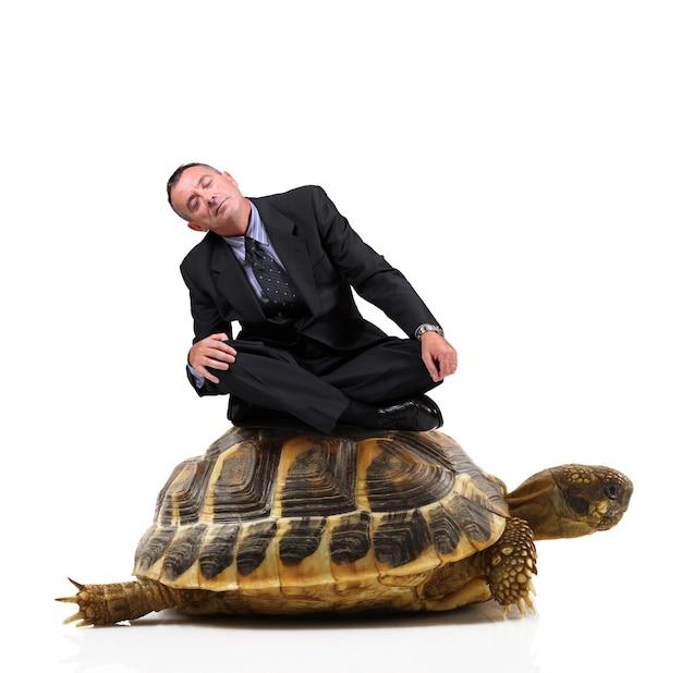 Kierownik siedzi na żółwiu