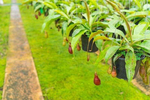 Kieszeń zagrożone zielony mięsożernych botanika