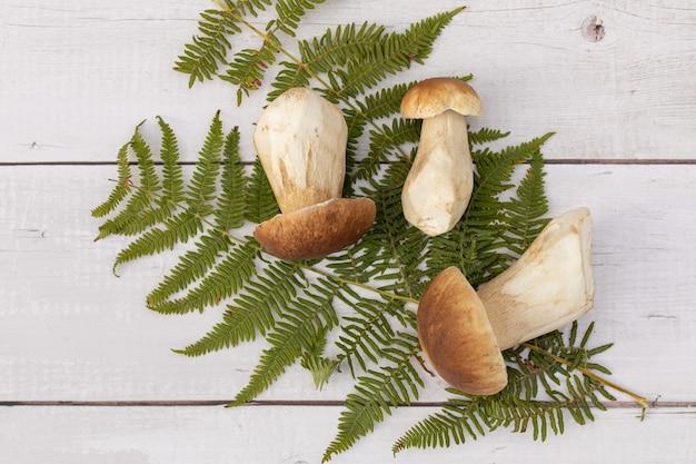 Kilka borowików zebranych jesienią na paprociach na białym tle drewna