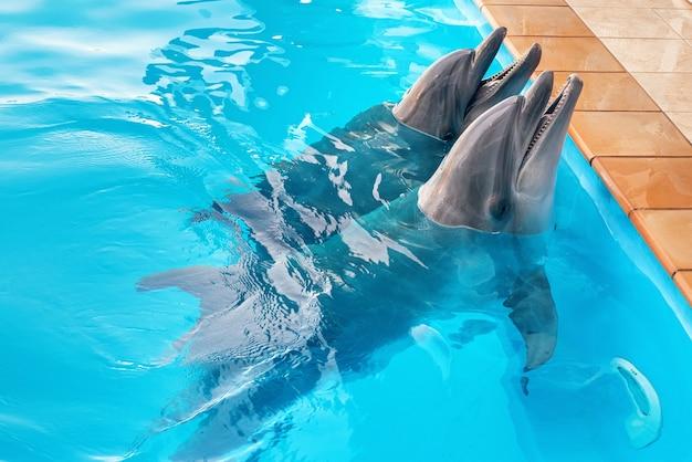 Kilka delfinów w basenie