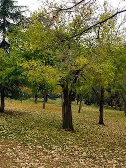 Kilka drzew obok siebie w ciągu dnia
