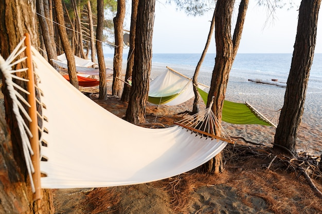 Kilka hamaków jest zawieszonych między sosnami na plaży morza czarnego, aby zapewnić komfortowy wypoczynek