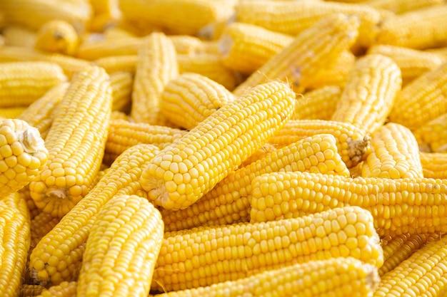 Kilka kłosów słodkiej kukurydzy. żółta kukurydza jako tło warzyw.