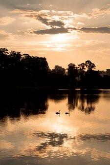 Kilka łabędzi sylwetka na jeziorze podczas zachodu słońca.