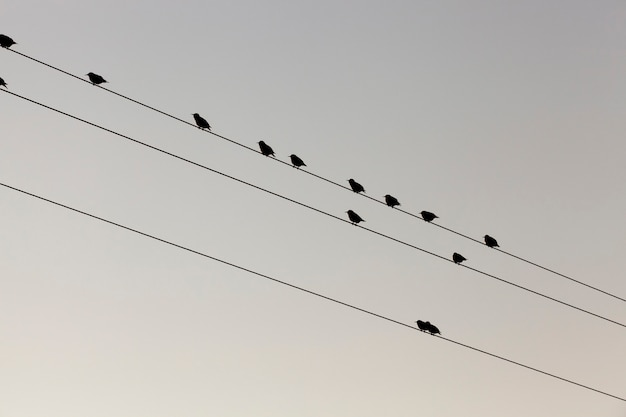 Kilka małych ptaków odpoczywa, siedząc na liniach słupów wysokiego napięcia na tle nieba. sfotografowany z bliska na dole.