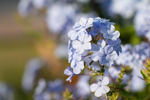 Kilka małych stokrotek kwitnie na zewnątrz.