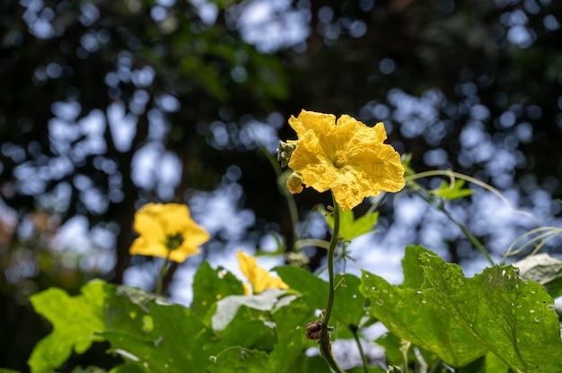 Kilka pięknych małych żółtych kwiatków w cieniu drzewa