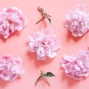 Kilka powtarzających się wzorów kwiatów piwonii w pastelowym różowym kolorze w pełnym rozkwicie i pąki, odizolowane na jasnoróżowym tle. leżał płasko, widok z góry. plac