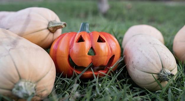 Kilka różnych dyń halloweenowych na trawie