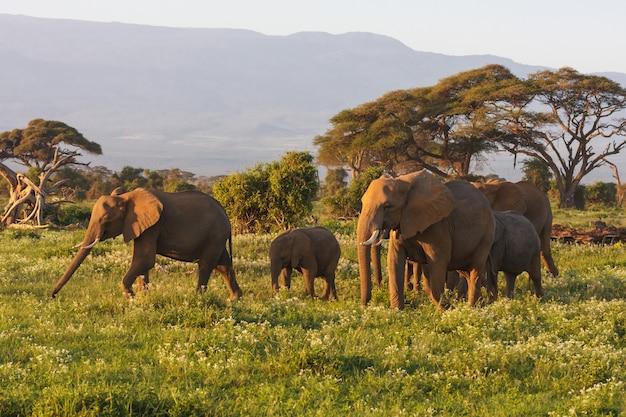 Kilka słoni w pobliżu góry kilimandżaro