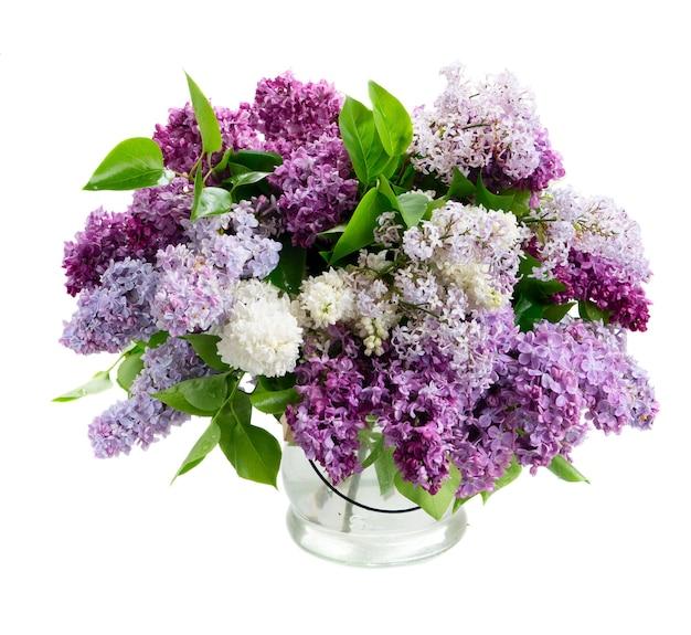 Kilka świeżych kwiatów bzu na białym tle