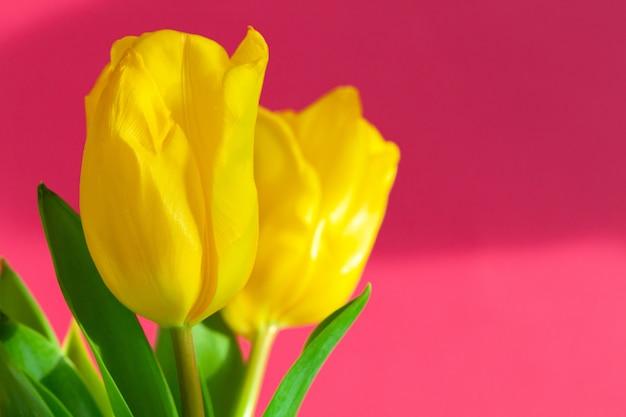 Kilka świeżych żółtych tulipanów