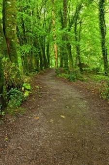 Killarney park leśny szlak hdr