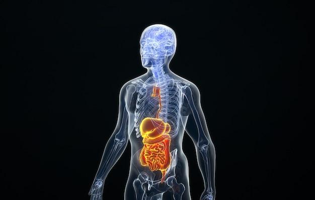 Kino 4d rendering struktury ludzkiego układu pokarmowego