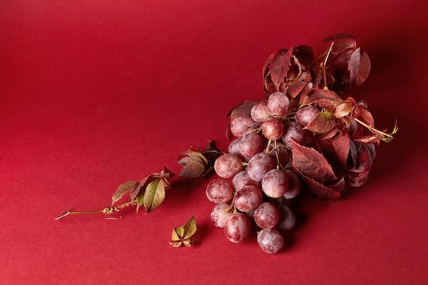 Kiść dojrzałych czerwonych winogron z liśćmi izolowanymi na czerwonym tle