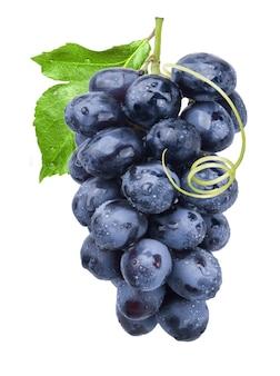 Kiść dojrzałych słodkich ciemnoniebieskich winogron w kroplach wody izolowane