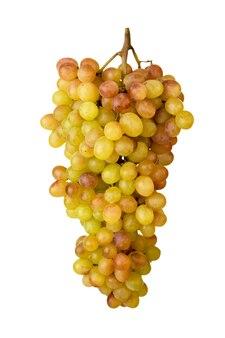 Kiść dojrzałych winogron rzeźbionych na białym tle, zbliżenie. odosobniony.