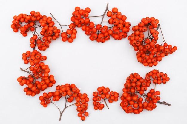 Kiście jagód jarzębiny na białym tle z miejscem na kopię