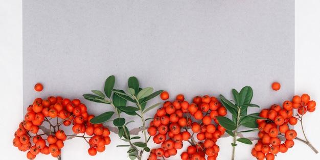 Kiście jagód jarzębiny z jasnopomarańczowymi soczystymi jagodami z miejscem na kopię
