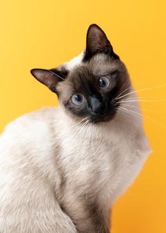 Kitty z monochromatyczną ścianą za nią