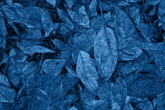 Klasyczna niebieska, monochromatyczna, nastrojowa ciemna kwiatowa fotografia z mało wysuszonymi liśćmi