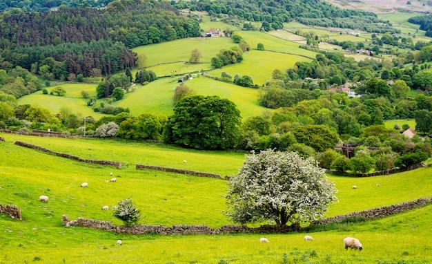 Klasyczna wiejska anglia zielony piękny krajobraz w yorkshire