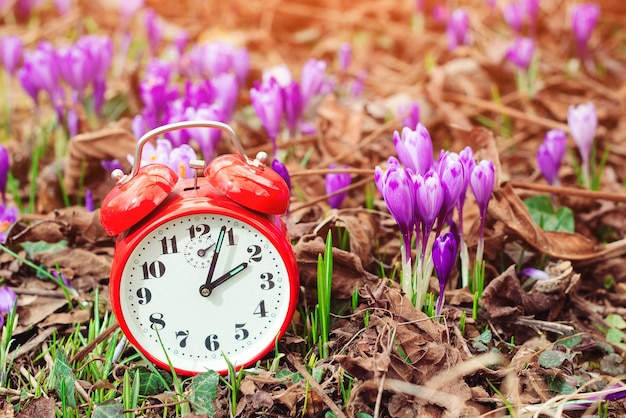 Klasyczny budzik na tle wiosennych kwiatów
