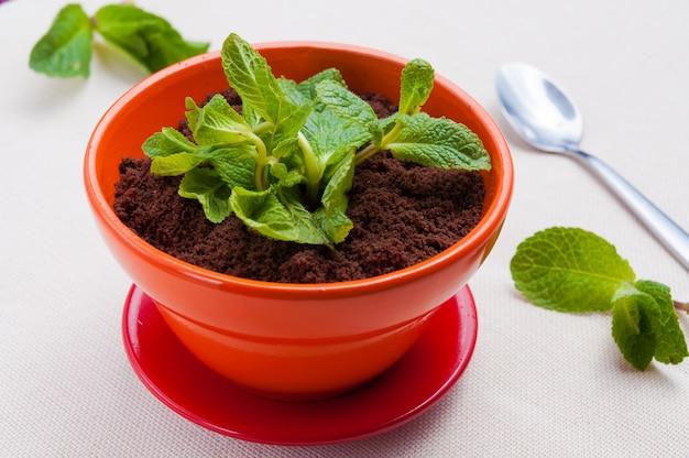 Klasyczny popularny deser tiramisu w niecodziennej porcji w doniczce