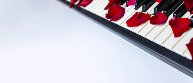 Klawisze fortepianowe porozrzucane płatkami róż, izolowane, kopia przestrzeń.
