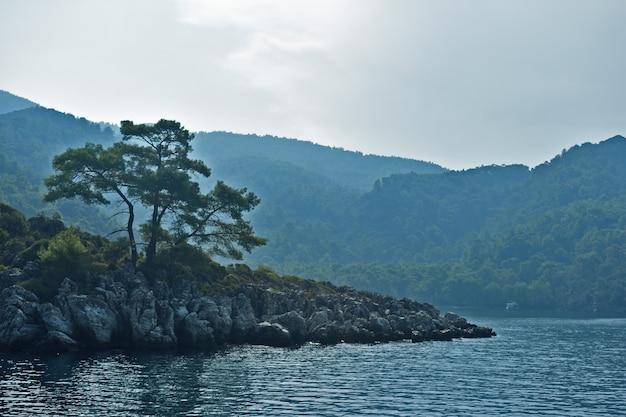 Klify i drzewa na wybrzeżu