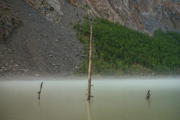Klimatyczna sceneria alpejska z suchym drzewem w zielonej wodzie górskiego jeziora na tle wysokiej ściany górskiej z lasem na skałach. malowniczy krajobraz z deszczowymi kręgami na wodzie zielonego górskiego jeziora.