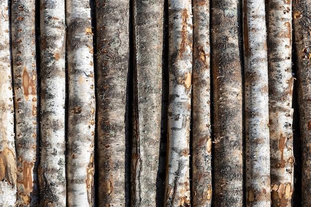 Kłody brzozowe w rzędach. drzewa są ułożone w stosy. drewno. zdjęcie wysokiej jakości