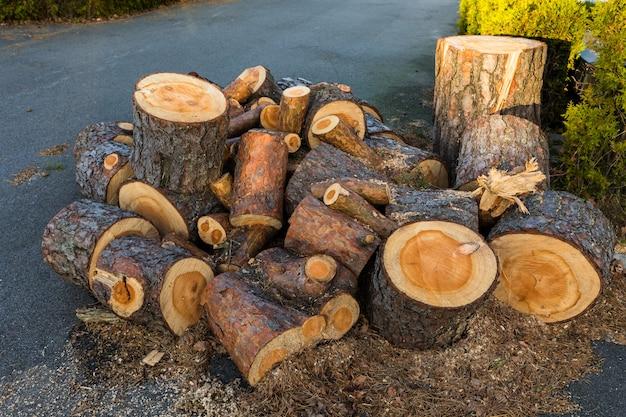 Kłody drewna sosnowego z jednej sosny leżącej w kupie na ziemi