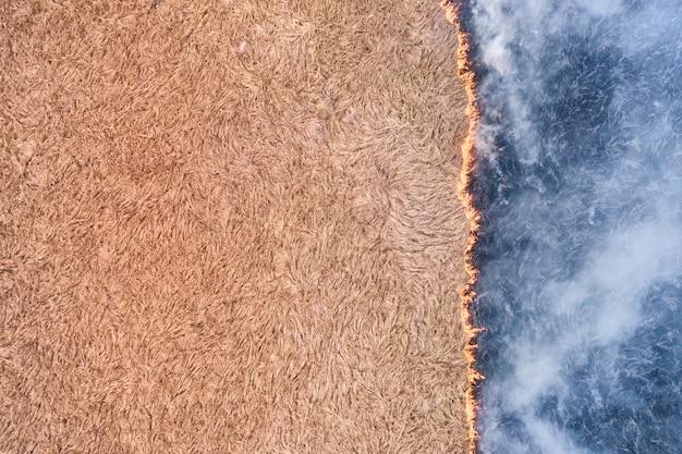 Kłody drewna wydobyte z sosnowego lasu leżą na stosie